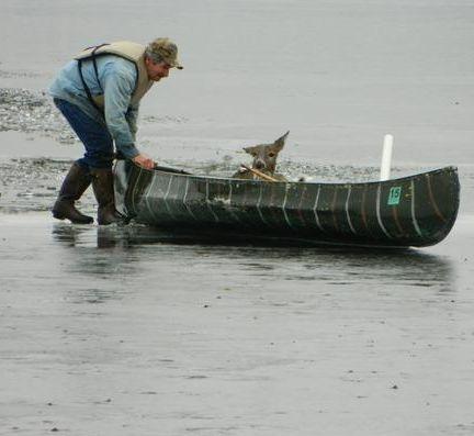deer saved by man in canoe