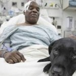 blind man saved by guide dog