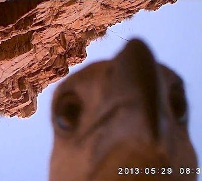 eagle selfie