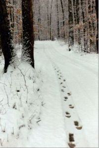 snowy footprints
