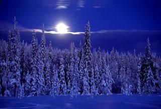 Swedan Forest