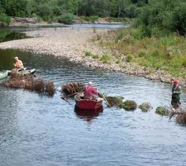 river Christmas Trees for Coho-tualatin valley trout unlimited