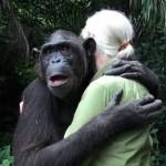 chimp hugs Jane Goodall