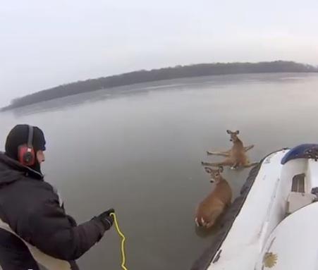 deer stuck on ice-hovercraft-GoProYouTube