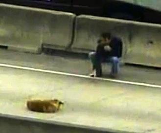 Dog-on-Busy-Highway-KHOUvid