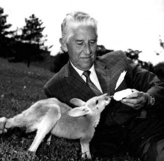 Marlin_Perkins_kangaroo-Wild_Kingdom-public-domain
