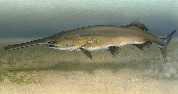 Paddlefish USFWService