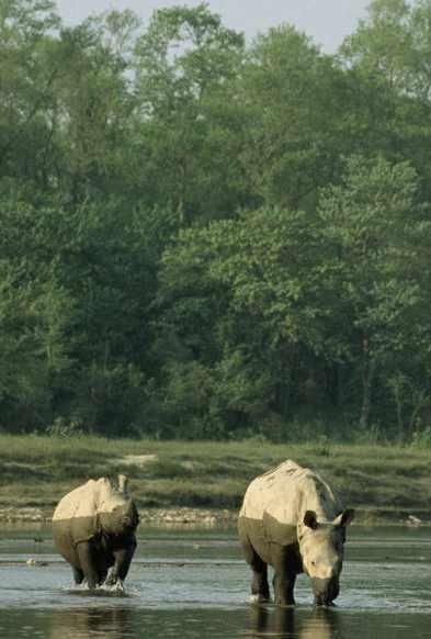 Rhinos half-wet Michael Gunther for WWF-stories