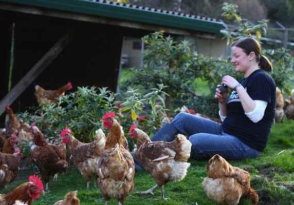 hens around woman-Flickr-Marji Beach-CC