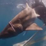 shark rescue choking-SeaLifeAquarium