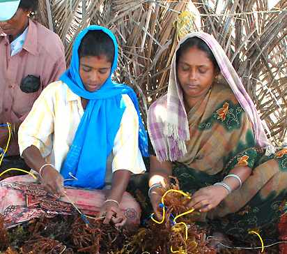 Indian_women_tie_seaweed_AquAgri_Processing-photo