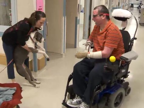 therapy_pit_bull_at_hospital_GlobalNewsvid