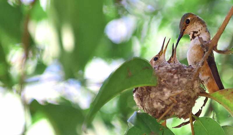 bird_nest_with_babies-DannyPerezPhotography-cc-Flickr