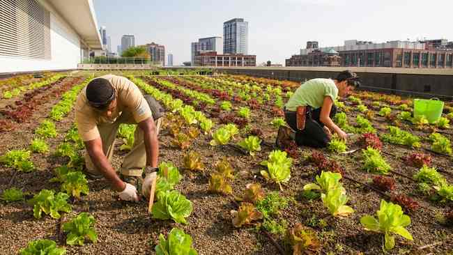 chicago-rooftop-farm_ChicagoBotanicGardenPhoto