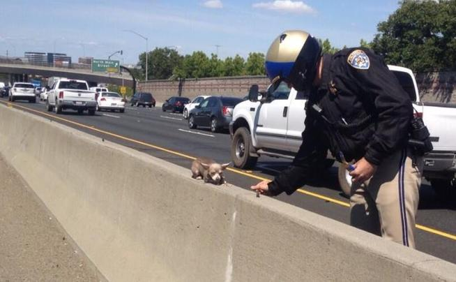 highway-officer-rescues-tiny-dog