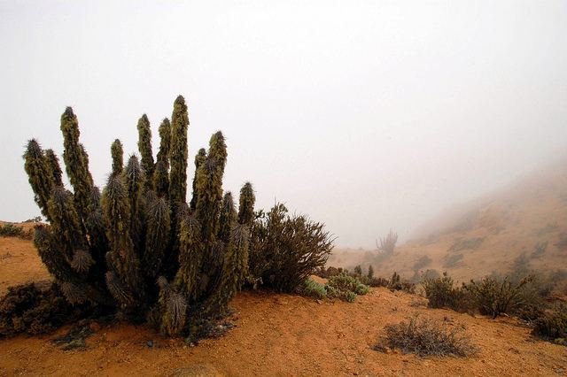 fog_in_the_desert-Chile-CC-Davide_Zanchettin