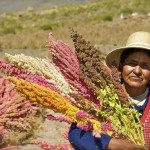 quinoa-farmer-Bolivia-Food_and_Agriculture_Organization