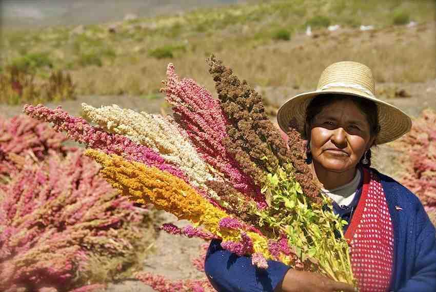 quinoa-farmer-Bolivia-Food_and_Agriculture_Organization