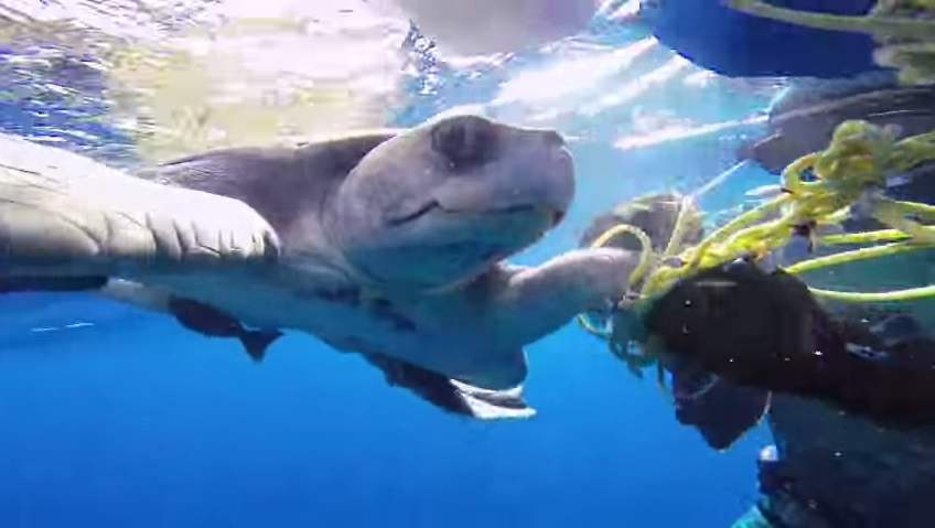sea-turtle-rescue-entangled-GoProVid