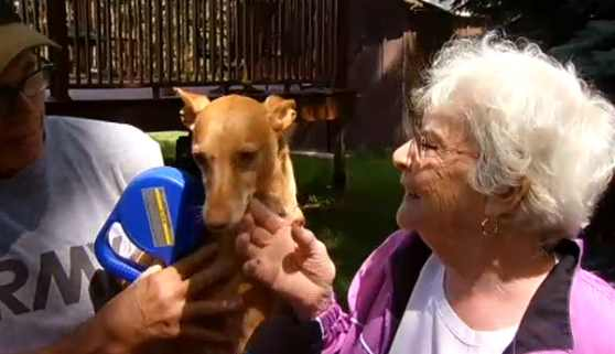 senior-saves-dog-from-coyote-NBCvideo