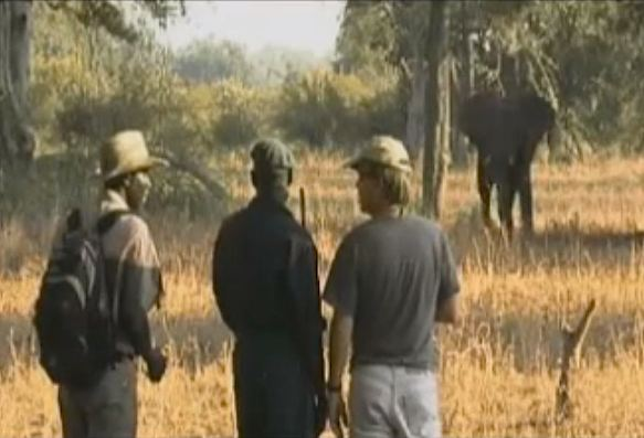 COMACO-conservationists-look-at-elephant-Video