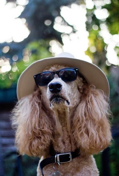 Dog-in-sunglasses-summer-hat-cc-Rob_B