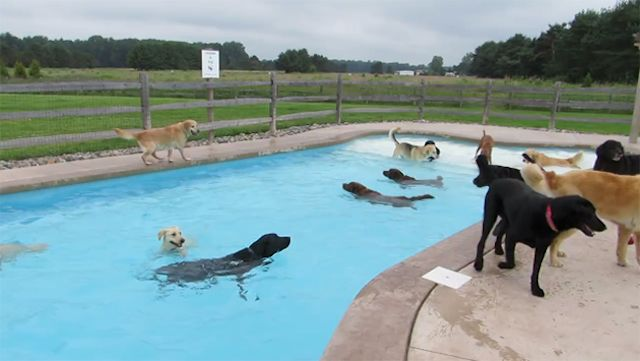 Can All Dogs Swim? - Vetstreet