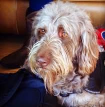 mutt-service-dog-convict-trained-small