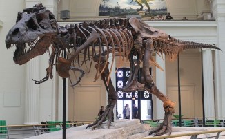 trex dinosaur-Sue_skeleton-CC-Connie Ma