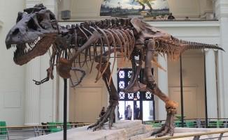 trex dinosaur-Sue_skeleton-CC-Connie Ma