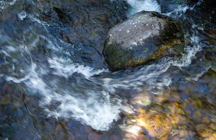 Warner-Creek-California-cc-David_Welch-750px