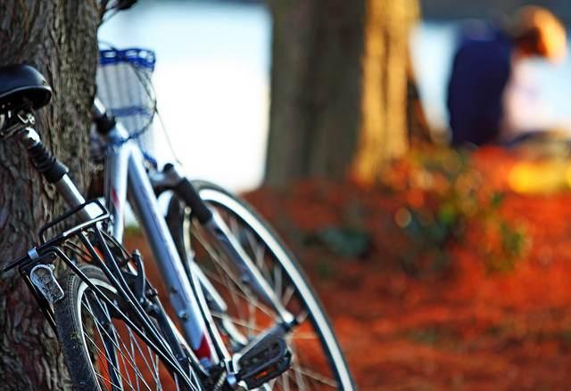 bicycle-leans-on-tree-CC-Ian_Sane