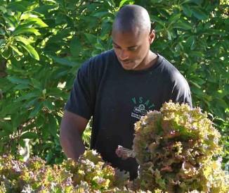 black-veteran-farming-lettuce-GroundOperations