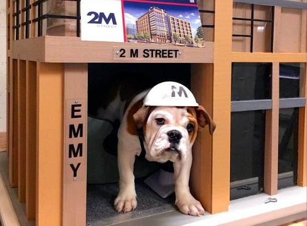 bulldog-is-apartment-communal-pet-Instagram-2Mpup