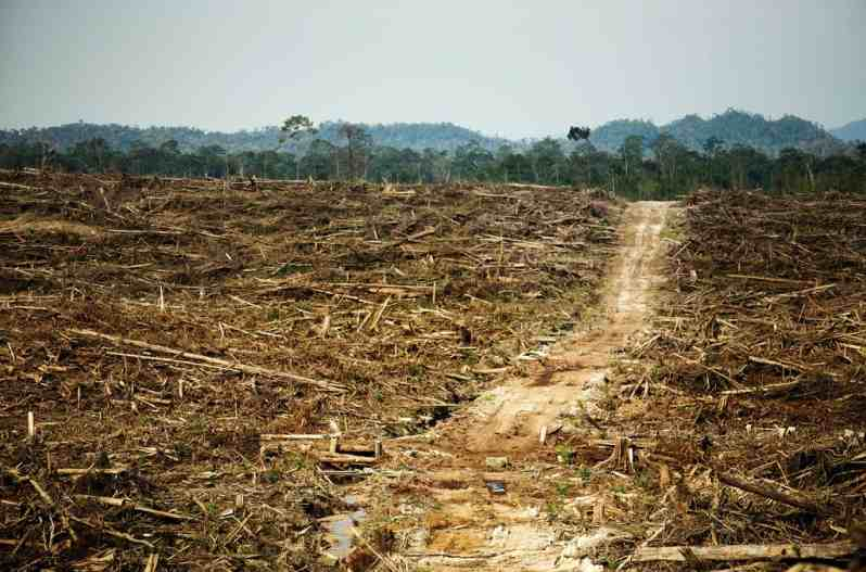 good thesis deforestation I have to write an argumentive paper i chose the rainforest as my topic and i want to argue that keeping the rainforest intact will give the economy more belefit then cutting it down.