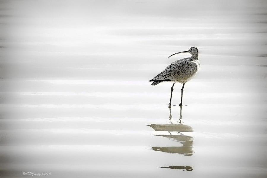 shore-bird-Steve_Corey-CC-California-900px