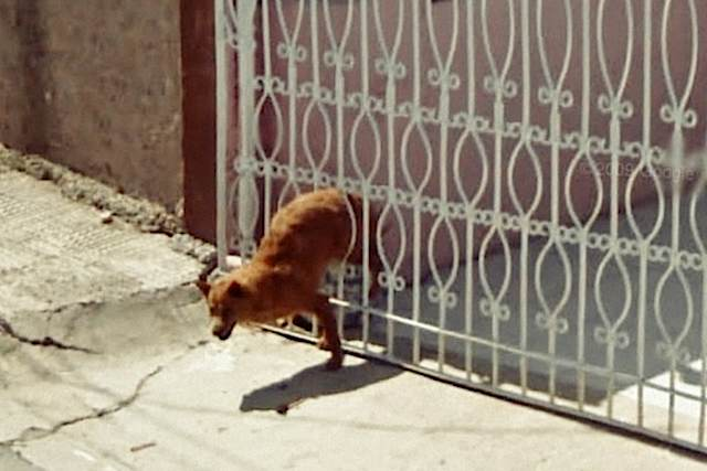 640-Dog_wriggles_through_gate_Google_Street_view-9eyes