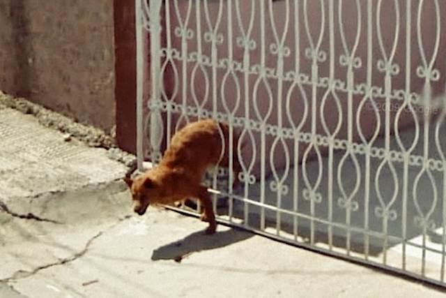 640-Dog_wriggles_through_gate_Google_Street_view-9eyes