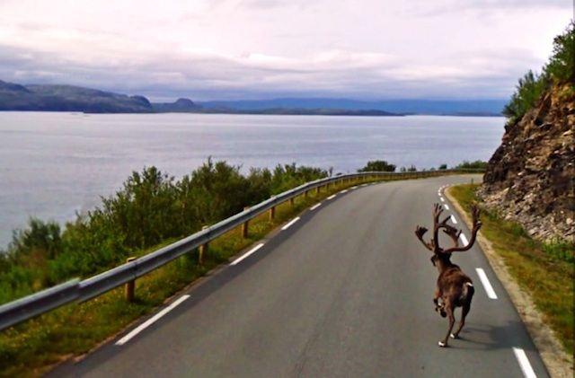 640-Moose_on_Loose-GoogleStreetView