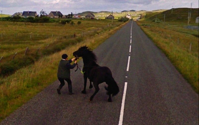 800-horse_stubborn_countryside-GoogleStreetView