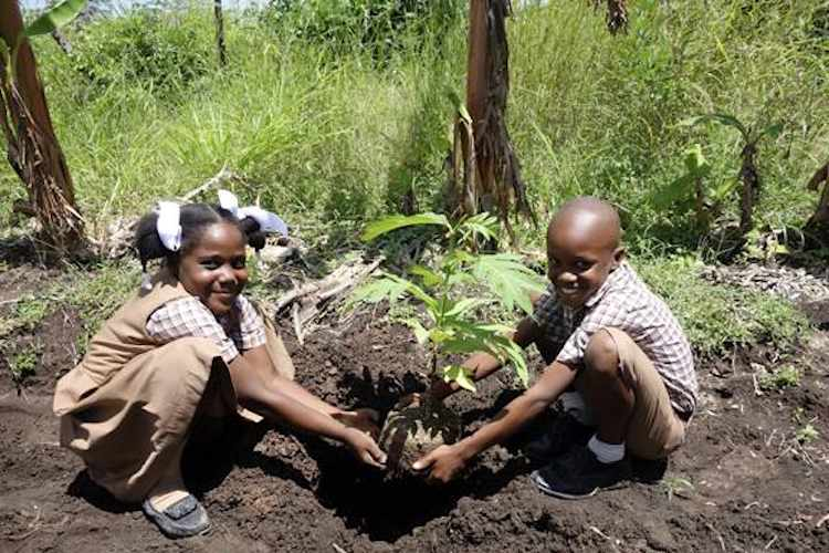 Trees_That_Feed-Foundation-Haitian-kids-planting-breadfruit-750px