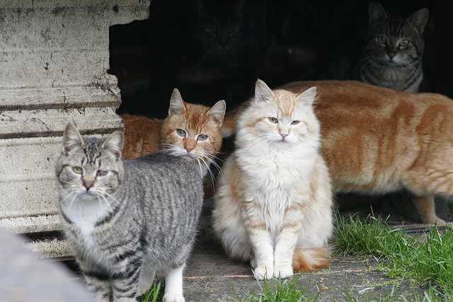 feral-cats-rescue-project-Chriss_Haight_Pagani