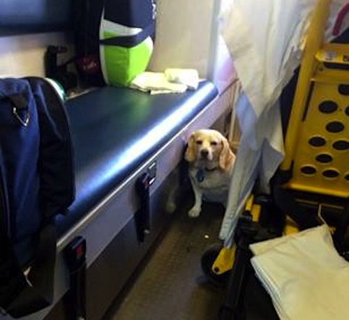 AMBULANCE_RIDE_DOG_byTannerBrown-EMS-team