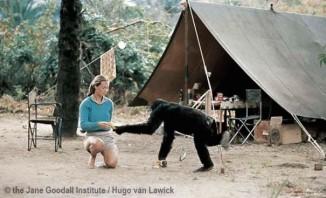 Jane Goodall, 1960-c-janegoodallinstitute-HugoVanLawick