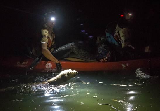 dog-in-river-Team Peak Performance-KristerGöransson