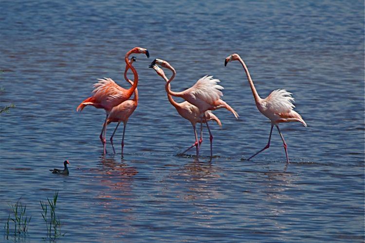 flamingos-Florida-vladeb-750px