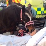 horse-says-goodbye-to-dying-cancer-patient-familyphoto