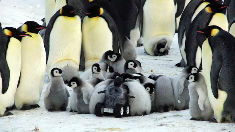 penguin-science-rover-Le_Maho-research-in-NatureMethods