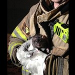 pet rat saved by fireman-CCfiredept-permission
