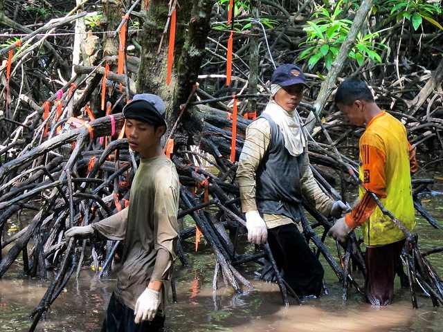 Mangrove workers Indonesia-CIFOR-CC-640px